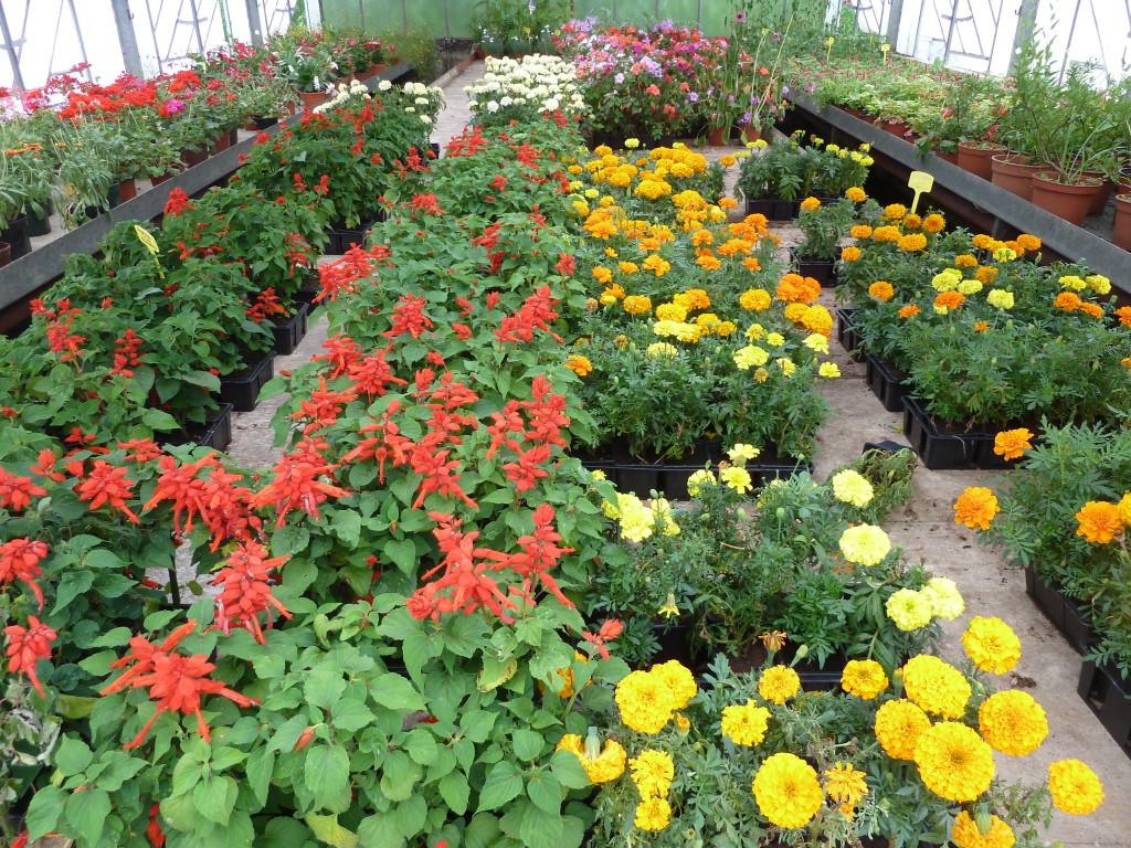 promotion horticulture apajh. Black Bedroom Furniture Sets. Home Design Ideas